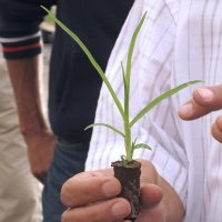 One of the seedlings that will soon be planted