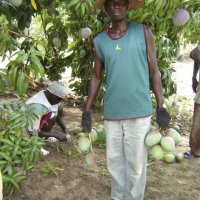 smallholder in front of his mango tree