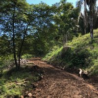 A rough road leads to the ginger field in the hills of Costa Rica