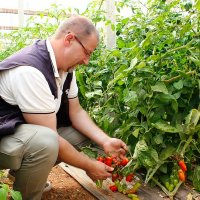 BioTropic agricultural engineer Mauro Finotti inspects the tomatoes