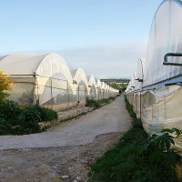 Some of the greenhouses of Alba Bio
