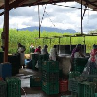 The washing facility at the BioTropic packing station