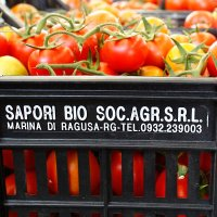 A crate of Sapori Bio tomatoes
