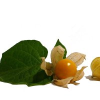 Physalis is also known as the Cape gooseberry